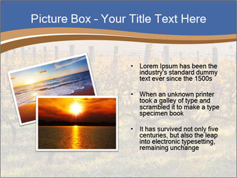 Vineyards PowerPoint Templates - Slide 20