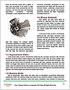 0000092546 Word Templates - Page 4