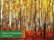 Yellow aspens PowerPoint Templates