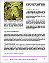 0000092573 Word Template - Page 4