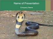 Cobra PowerPoint Template