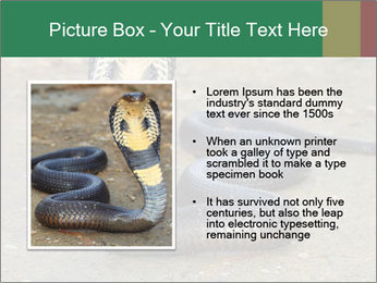 Cobra PowerPoint Template - Slide 13