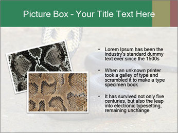 Cobra PowerPoint Template - Slide 20