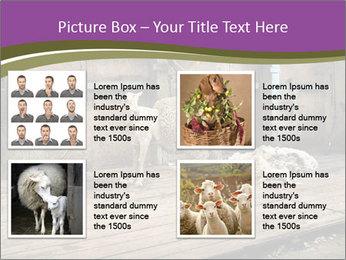 Half shorn sheep PowerPoint Template - Slide 14