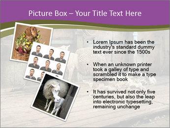 Half shorn sheep PowerPoint Template - Slide 17