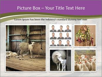 Half shorn sheep PowerPoint Template - Slide 19