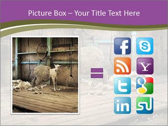 Half shorn sheep PowerPoint Template - Slide 21