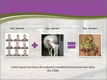 Half shorn sheep PowerPoint Template - Slide 22
