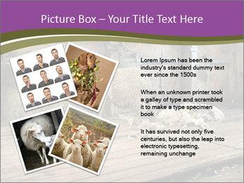 Half shorn sheep PowerPoint Template - Slide 23