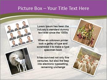 Half shorn sheep PowerPoint Template - Slide 24