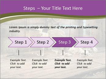 Half shorn sheep PowerPoint Template - Slide 4