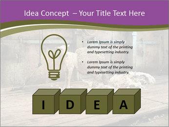 Half shorn sheep PowerPoint Template - Slide 80