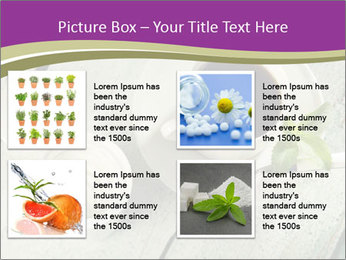White stevia PowerPoint Template - Slide 14