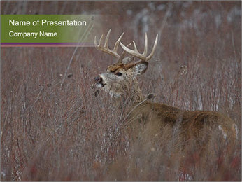 Deer PowerPoint Templates - Slide 1