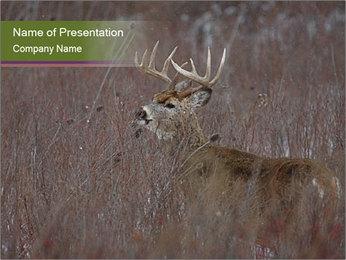 Deer PowerPoint Template - Slide 1