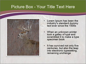 Deer PowerPoint Template - Slide 13