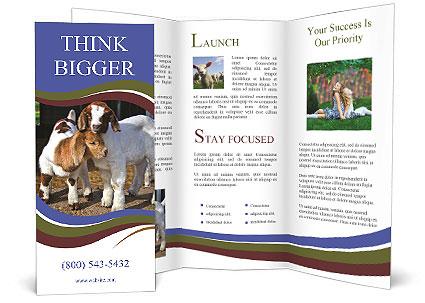 0000092644 Brochure Template