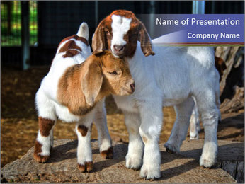 Baby Goats PowerPoint Templates - Slide 1