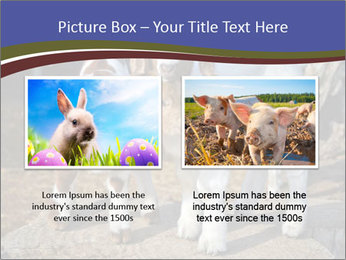 Baby Goats PowerPoint Templates - Slide 18