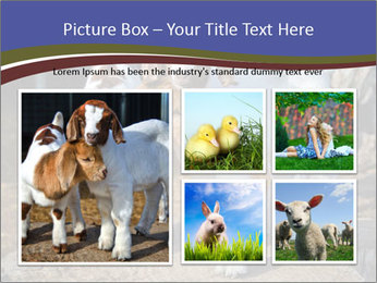 Baby Goats PowerPoint Templates - Slide 19