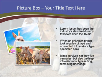 Baby Goats PowerPoint Templates - Slide 20