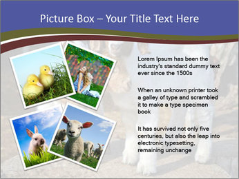 Baby Goats PowerPoint Templates - Slide 23