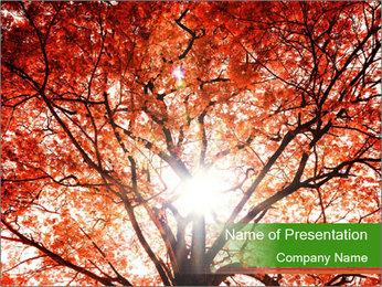 Tree autumn. PowerPoint Template - Slide 1