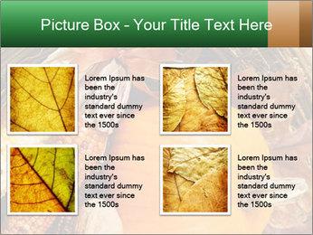 A colorful orange pumpkin PowerPoint Template - Slide 14