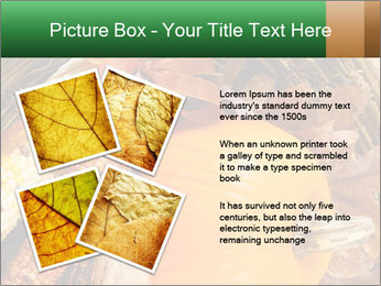 A colorful orange pumpkin PowerPoint Template - Slide 23