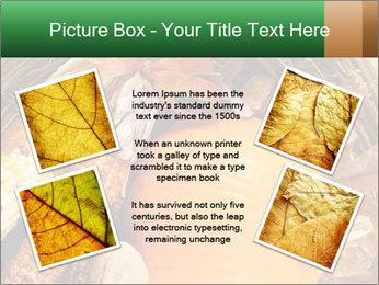 A colorful orange pumpkin PowerPoint Template - Slide 24