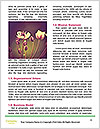 0000092709 Word Template - Page 4