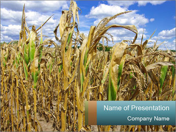 Farm PowerPoint Template - Slide 1