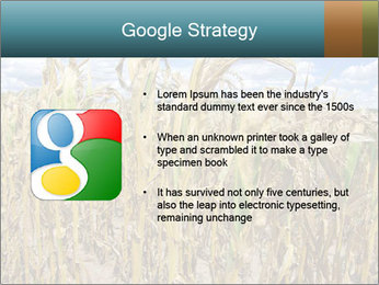 Farm PowerPoint Template - Slide 10