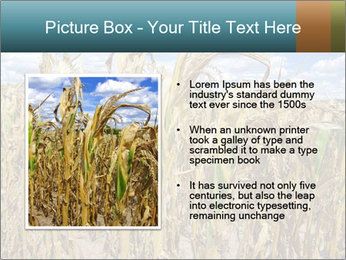 Farm PowerPoint Template - Slide 13