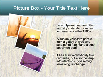 Farm PowerPoint Template - Slide 17