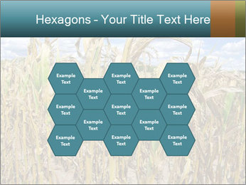 Farm PowerPoint Template - Slide 44