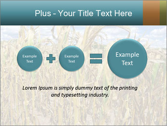 Farm PowerPoint Template - Slide 75