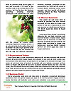 0000092724 Word Template - Page 4