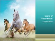 Horses in dust PowerPoint Templates