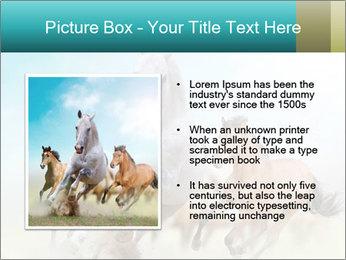 Horses in dust PowerPoint Template - Slide 13