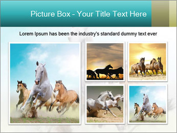 Horses in dust PowerPoint Template - Slide 19