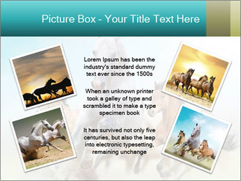 Horses in dust PowerPoint Template - Slide 24