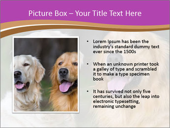 Dogs playing in the meadow PowerPoint Template - Slide 13