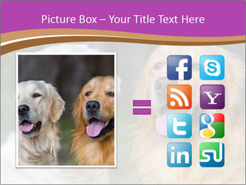 Dogs playing in the meadow PowerPoint Template - Slide 21