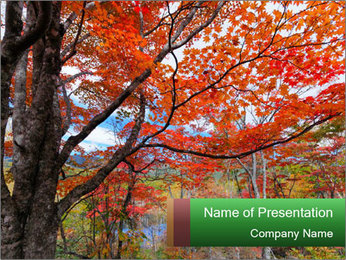 Forest PowerPoint Template - Slide 1