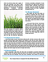 0000092782 Word Template - Page 4