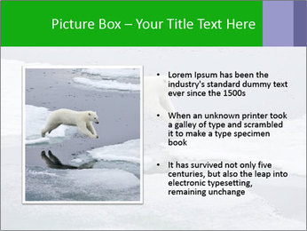 Polar bear PowerPoint Template - Slide 13