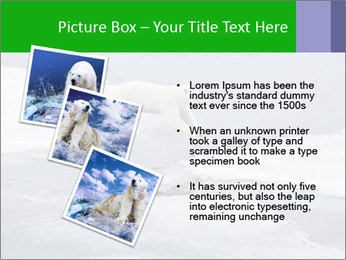 Polar bear PowerPoint Template - Slide 17