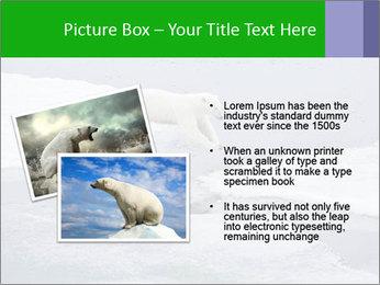 Polar bear PowerPoint Template - Slide 20
