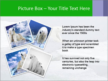 Polar bear PowerPoint Template - Slide 23